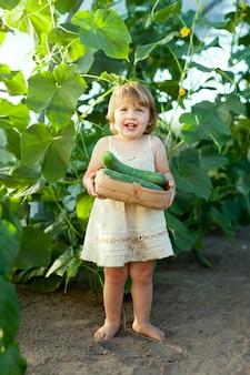 Dziecko zbierające ogórki w cieplarni