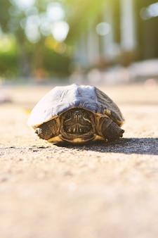 Dziecko żółw na podłodze w przyrodzie