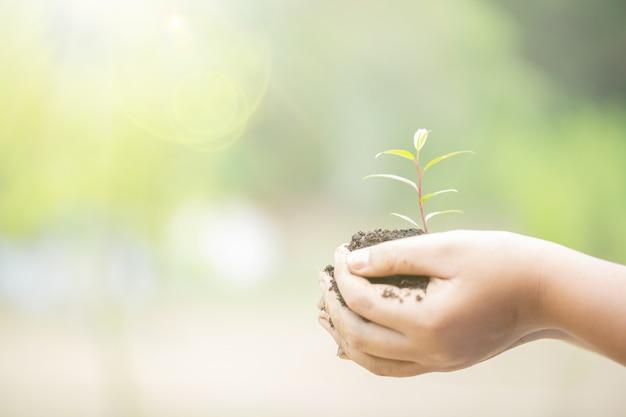 Dzień ziemi w rękach drzew rosnących sadzonek. żeńska ręka trzyma drzewa na natury pola trawie.