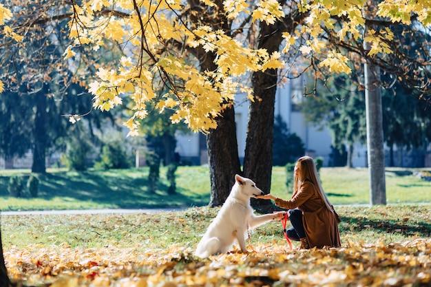 Dziewczyna chodzi przy jesień parkiem z młodym białym szwajcarskim pasterskim psem