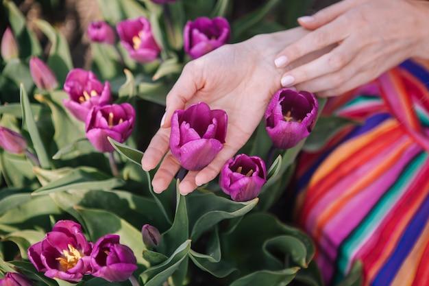Dziewczyna delikatnie dotyka kolorowych fioletowych kwiatów tulipanów w pięknych kwiatowych polach tulipanów