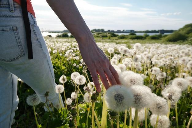 Dziewczyna idzie przez łąkę i dłonią dotyka mleczy. z powrotem