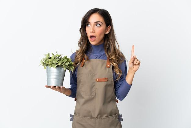 Dziewczyna ogrodnik trzyma roślinę na białym tle na białej ścianie myśli pomysł wskazując palcem w górę
