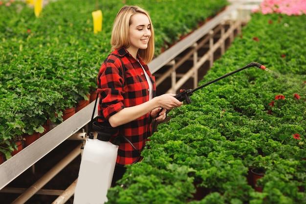 Dziewczyna rozpyla rośliny. dziewczyna pracuje w szklarniach. rośliny nawozowe