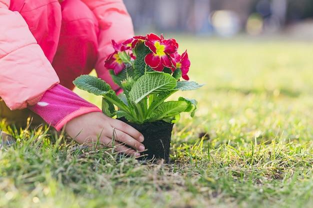 Dziewczyna sadząca wiosenny kwiat