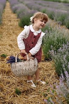 Dziewczyna spaceruje zbierając kwiaty na lawendowym polu.