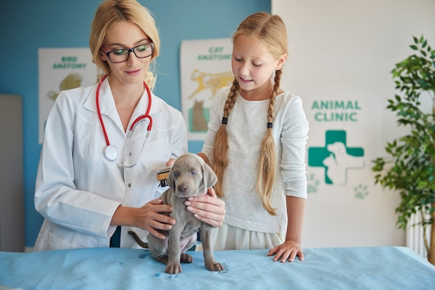 Dziewczyna szczotkuje swojego szczeniaka u weterynarza