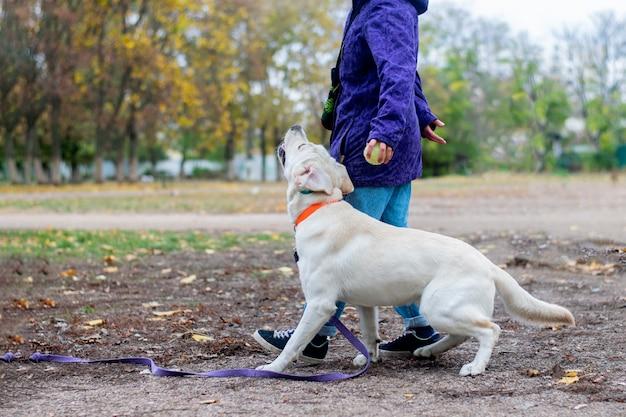 Dziewczyna trenuje swojego psa w komendach.