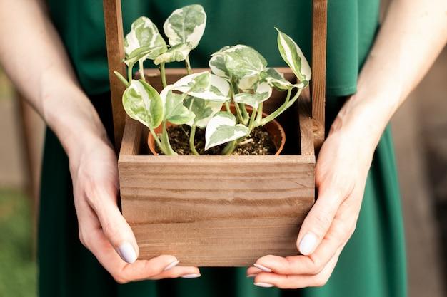Dziewczyna trzyma rośliny doniczkowej w drewnianym pudełku