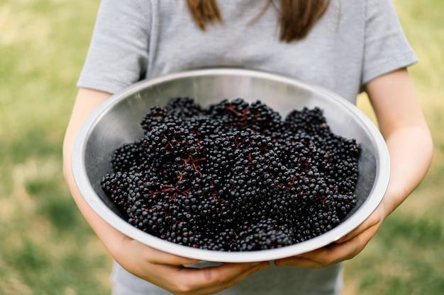 Dziewczyna trzyma w rękach grona owoców czarnego bzu sambucus nigra czarny bez czarny europejski czarny bez...