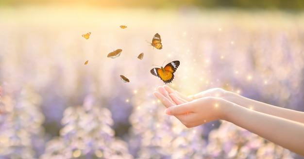 Dziewczyna uwalnia motyla ze słoika, złoty moment niebieski pojęcie wolności