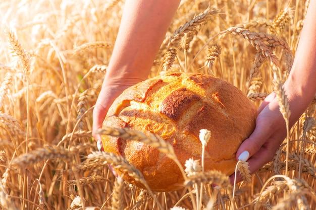 Dziewczyna w rękach trzyma okrągły chleb wśród pola pszenicy, upalny letni dzień