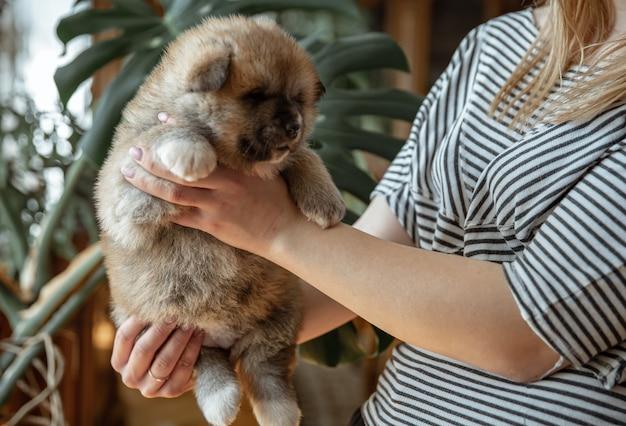 Dziewczynka trzyma w ramionach małego puszystego nowonarodzonego szczeniaka