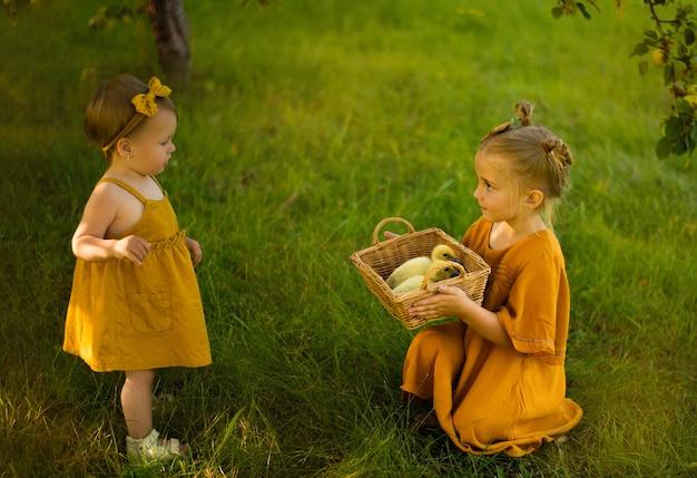 Dziewczynki dzieci, pokazuje młodszej siostrze kaczki w koszu, na farmie w ogrodzie, wiosna, ciepło jak lato w parku