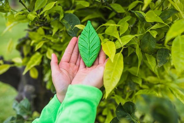 Dziewczyny ręka trzyma glinianego liść blisko rośliny w parku