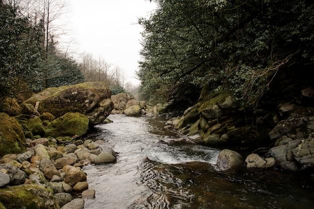 Dzika górska rzeka płynie otoczona przez porośnięte mchem skały i bujne liście w łaźniach afrodyty w gruzji
