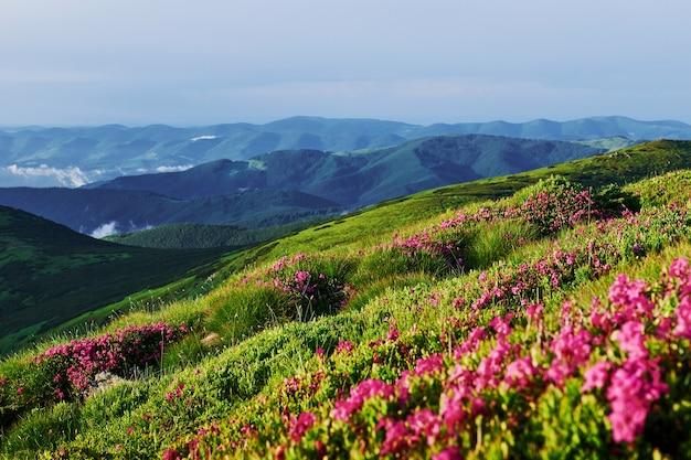 Dzika natura. majestatyczne karpaty. piękny krajobraz. widok zapierający dech w piersiach.