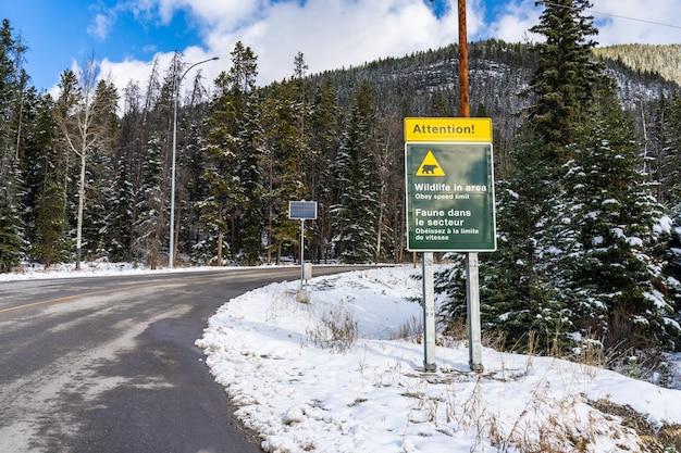 Dzika przyroda w okolicy znak ostrzegawczy góra norquay malownicza jazda górska droga alberta kanada