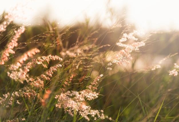 Dzika trawa rośnie w przyrodzie