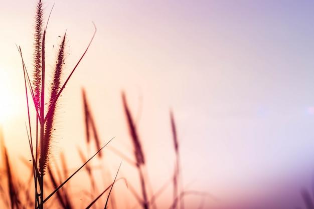 Dzika trawa wiejący wiatr o zmierzchu