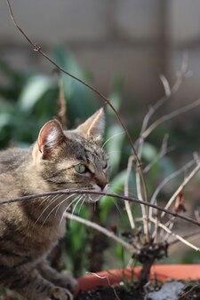 Dziki i domowy kot w paski na spacer