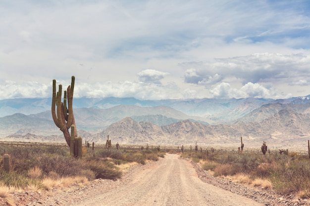 Dziki kaktus na altiplano w andach w argentynie