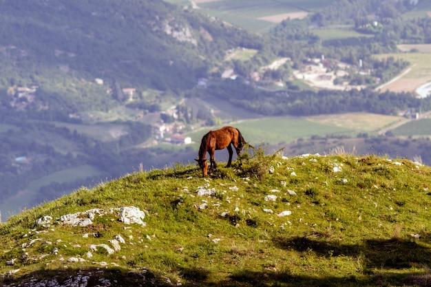 Dziki koń na grzbiecie góry