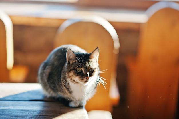 Dziki kot siedzi na stole na słońcu, pławiąc się w słońcu o mrożonym poranku.