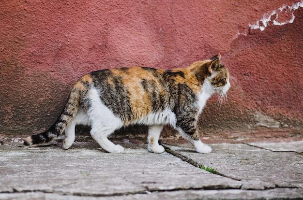 Dziki kotek na zewnątrz. spacer po ulicach brudnego kota. samotny bezdomny kot. uliczny kot w słonecznym dniu. bezdomny kot na ulicy miasta.