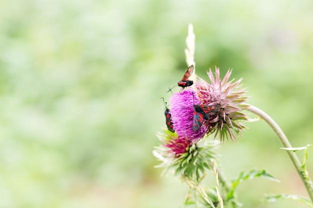 Dziki kwiat z motylami