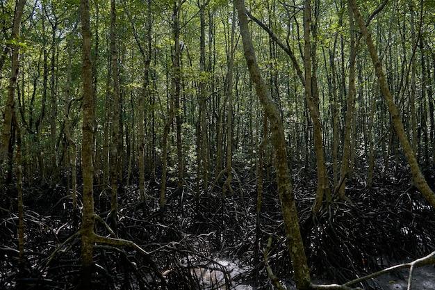 Dziki las namorzynowy. drzewa namorzynowe z bliska