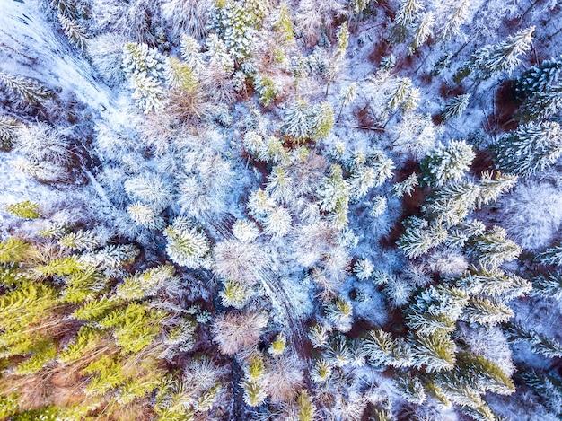 Dziki las świerkowy na początku zimy. trochę śniegu na ziemi i gałęziach. widok z góry pionowo w dół