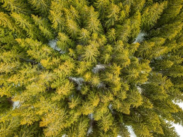 Dziki las świerkowy na początku zimy. trochę śniegu na ziemi. widok z lotu ptaka pionowo w dół