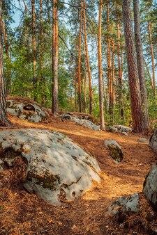 Dziki las z ogromnymi kamieniami pokrytymi mchem to mistyczny naturalny krajobraz północnej natury