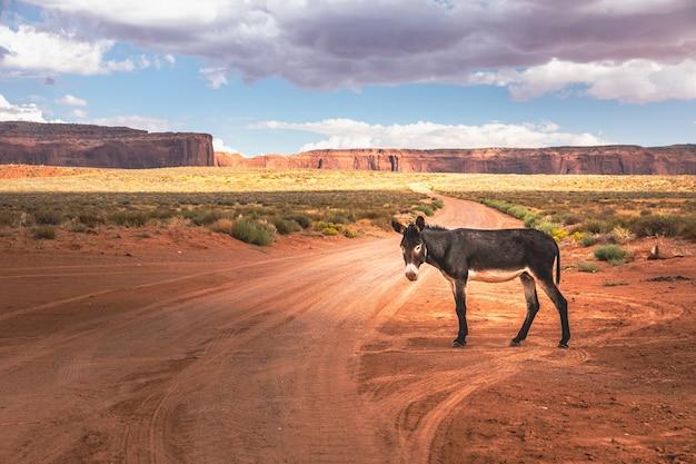 Dziki osioł przed malowniczym kinowym krajobrazem, arizona