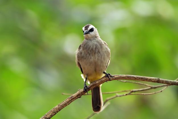 Dziki ptak na zbliżenie zwierząt gałęzi