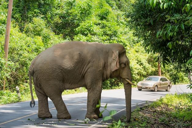 Dziki słoń w khao yai park narodowy tajlandia
