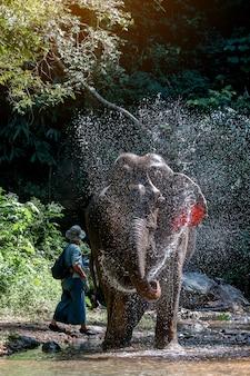 Dziki słoń w pięknym lesie