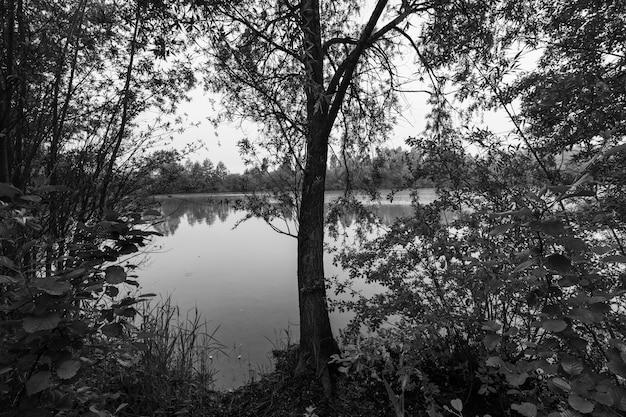 Dziki staw otoczony czarno-białymi lasami