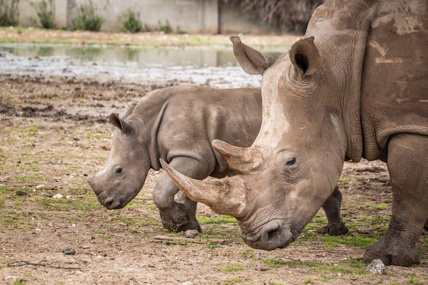 Dzikie afrykańskie zwierzęta