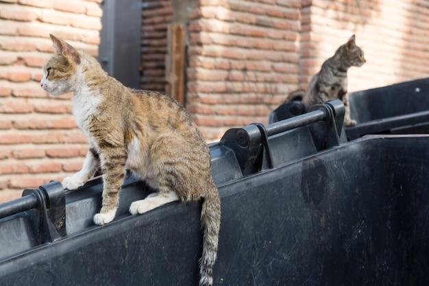 Dzikie bezpańskie koty i psy na ulicach miasta. tbilisi, gruzja. zdjęcie wysokiej jakości