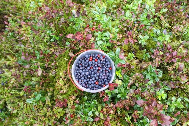 Dzikie dojrzałe jagody i żurawiny w plastikowej misce w letnim lesie.