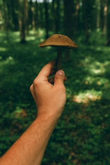 Dzikie grzyby w lesie, naturalna żywność, letnie zbiory.