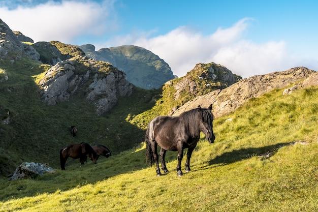 Dzikie konie na górze penas de aya w oiartzun, gipuzkoa, hiszpania