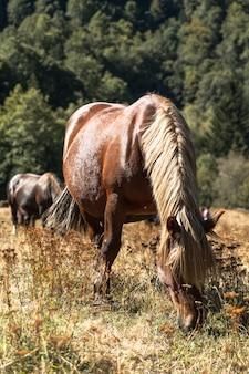 Dzikie konie pasące się na trawie w buszu