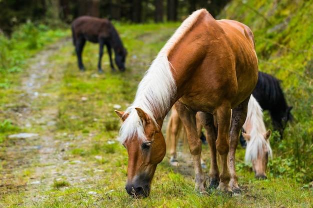 Dzikie konie w lesie austrii