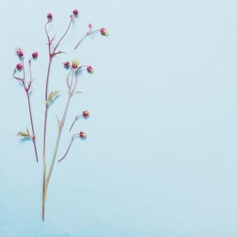 Dzikie kwiaty avens na tle papieru