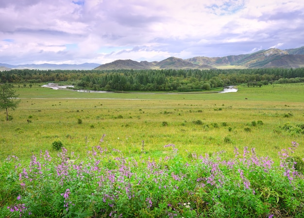 Dzikie kwiaty na letnim zielonym polu drzew nad brzegiem rzeki pod zachmurzonym niebem syberia rosja