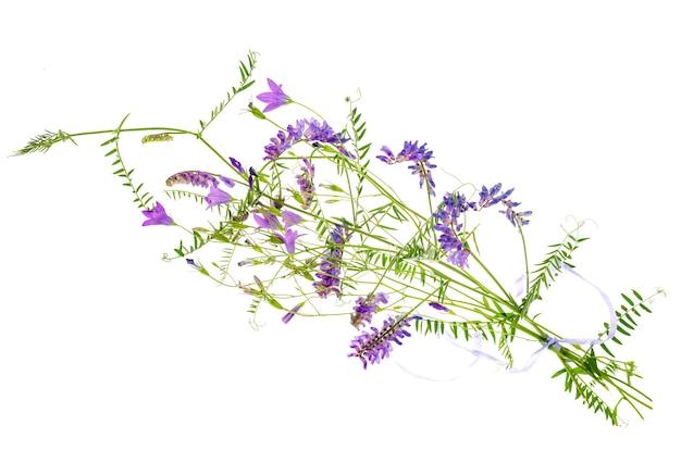 Dzikie kwiaty polne z kwiatostanami bzu