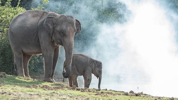 Dzikie rodziny słoni w lesie.
